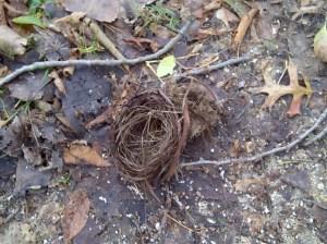 Fallen bird nest