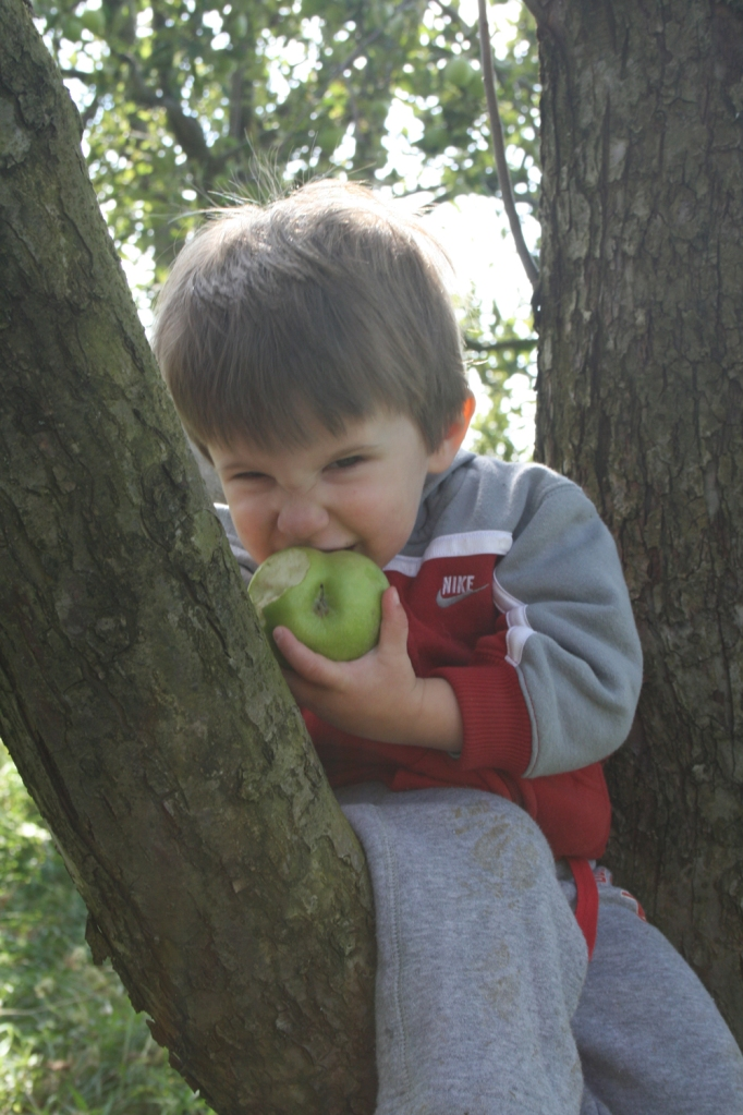 My son taking a big bite out of a freshly picked Granny Smith apple.