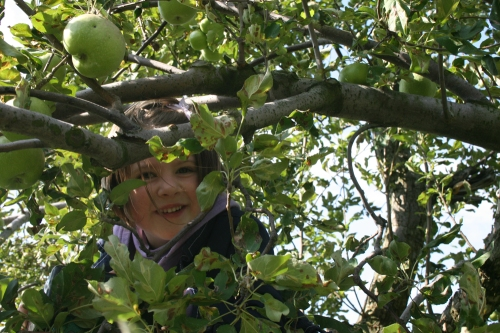 My daughter enjoying hide-and-seek in the leaves of an apple tree.