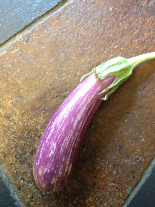 'Fairy Tale' eggplant - ready to slice, toss with oil, salt and pepper and grill for the perfect summer treat.